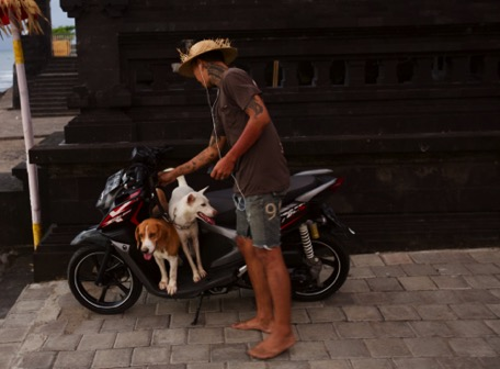 common way to transport dogs in Indonesien