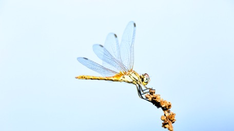 ... hunt dragon-flies ...